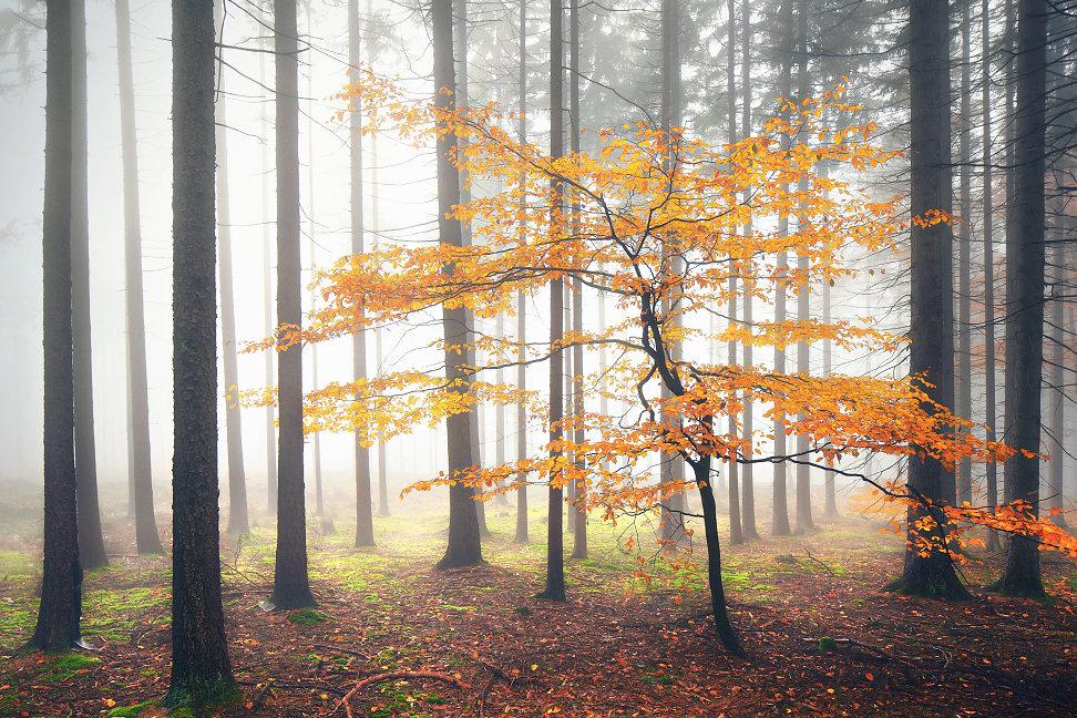 11_November_2012bwwsss.jpg