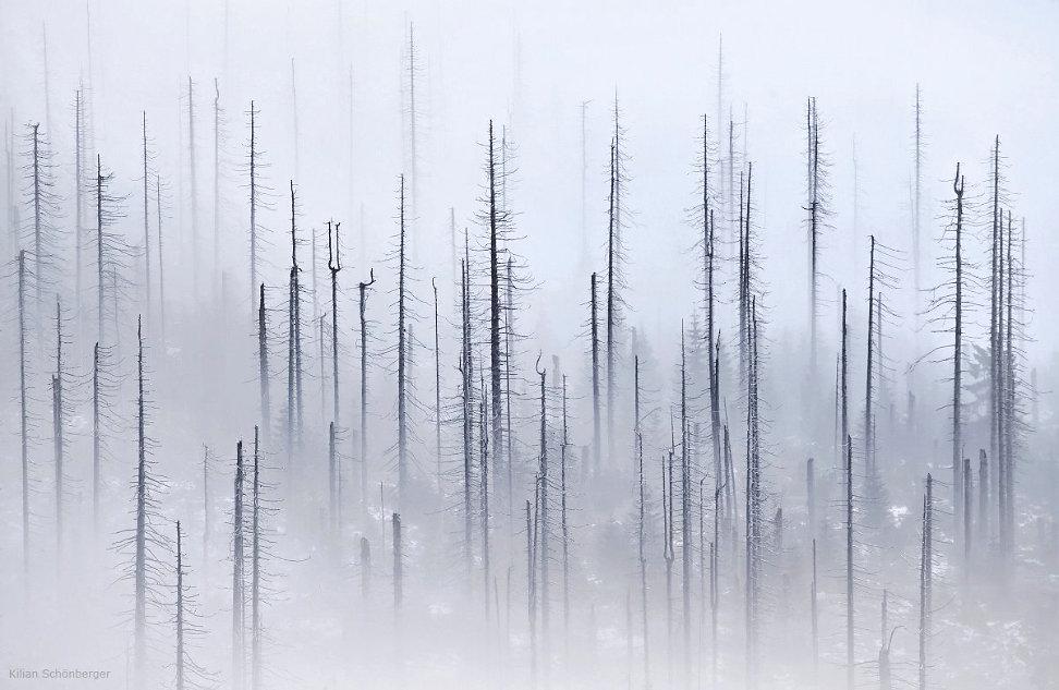 foggy-forest-1.jpg