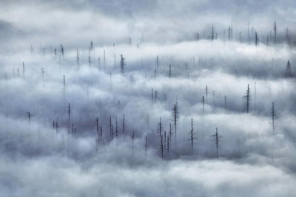 foggy-forest-2.jpg