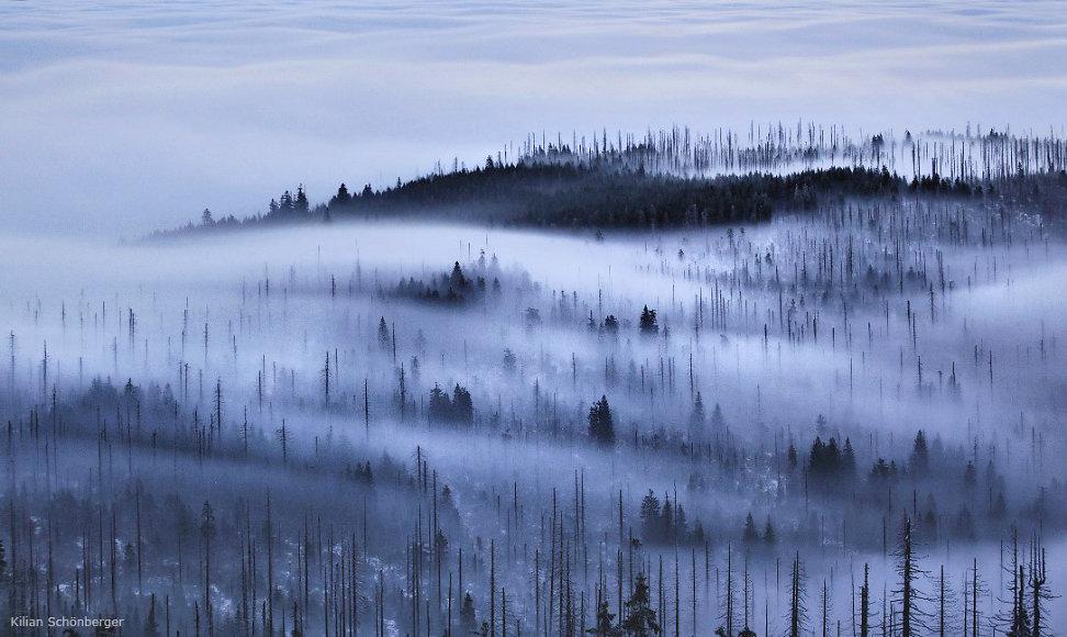 foggy-forest-3.jpg