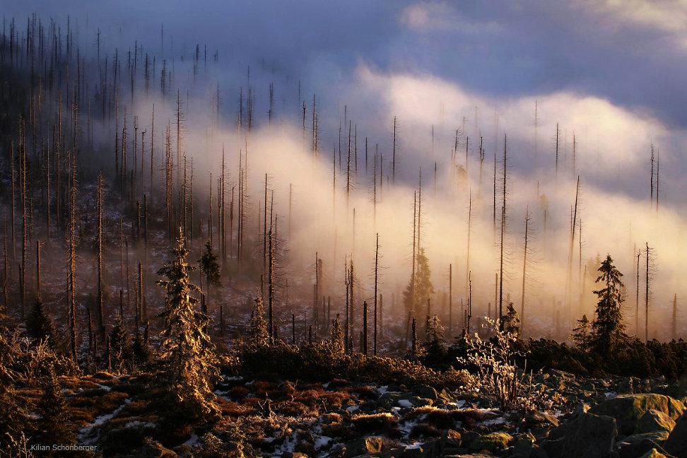 foggy-forest-4.jpg
