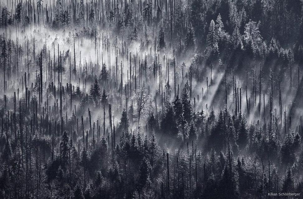 foggy-forest-6.jpg