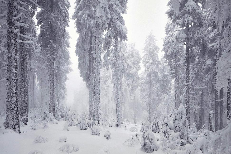 forest-wood-wald-fog-nebel-24.jpg