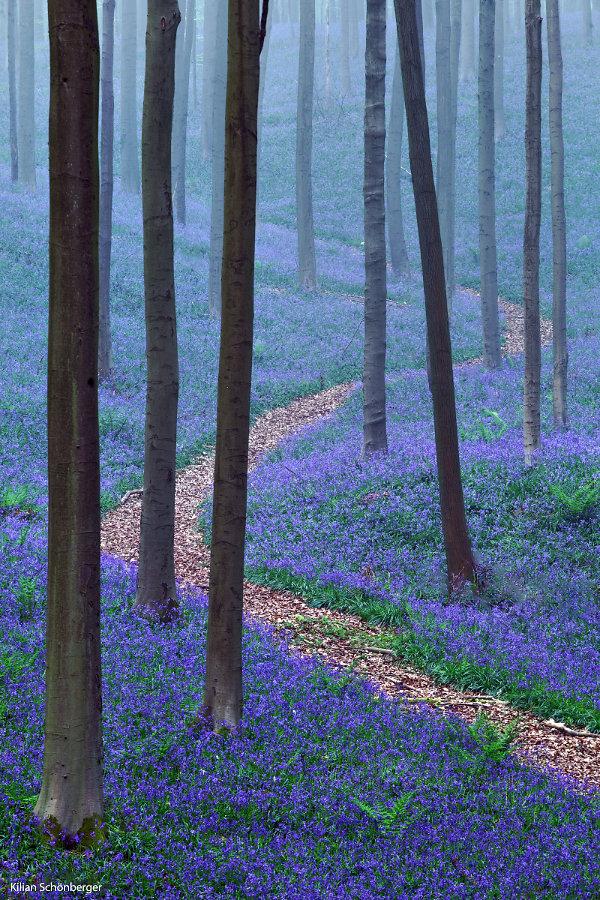 Blueforest-1.jpg
